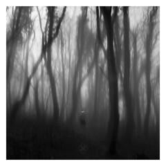 Haunting (picturedevon.co.uk) Tags: halloween zombie bw bnw blackandwhite woods forest scary dark spooky grey mono brixham devon tree winter