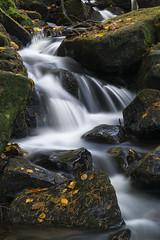 Beeley Brook (l4ts) Tags: landscape derbyshire peakdistrict darkpeak beeley beeleybrook beeleyplantation waterfall autu fallenleaves longexposure circularpolarisingfilter