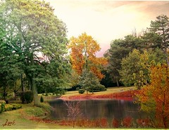 Autumn with Texture (Lynn English) Tags: park pond trees autumn fantasticnature