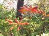 Minnehaha Park 171022_037 (jimcnb) Tags: 2017 oktober minnehaha minneapolis minnesota