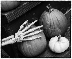 Stealthy Pumpkin Grab (lclower19) Tags: 52in2017 week44 4452 522017 skeleton hand pumpkins black white iphone bw bones ruleofthirds scary eerie odc halloween
