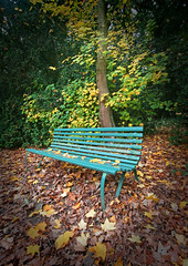 IMG_0632 (bob_rmg) Tags: perrow arboretum tree autumn colour leaves bedale thorp seat bench