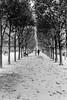 Allee in Paris (alex koller) Tags: paris frankreich france europa travel city metropole blackwhite bw