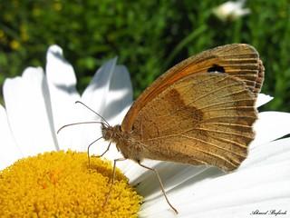 Butterfly 1458