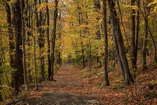 Yellowy Path