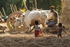 Kawardha - Chhattisgarh - India (wietsej) Tags: kawardha chhattisgarh india sony a100 zeiss sal135f18z 13518 sonnar13518za farming children cows rural tribal village man bhoramdeo wietse jongsma