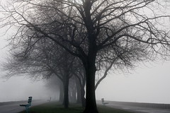 Alone In The City (marylee.agnew) Tags: fog atmosphere alone urban trees landscape isolation city
