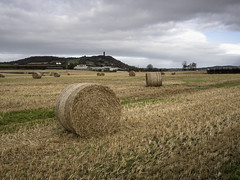 October Scrabo Harvest scene (frcrossnacreevy) Tags: 2017 october olympusomdem1 olympusmzuiko17mm18 scrabo northernireland countydown strawrolls harvest 1001nights