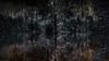 Pondscape I (theReedHead) Tags: thereedhead milwaukeephotographers wisconsinphotographers sonya7rii sonycameras sonyemount sonymirrorlesscameras sony70300mmf4556 sonyzoomlens pondscapes waterreflections alterrealism alterrealistic dreamy fantastic fantastical mysterious otherworldly milwaukee wisconsin milwaukeelakefront