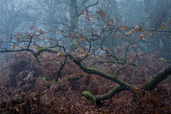 Below (jellyfire) Tags: billingsford distagont3518 eastanglia eastofengland forest greatbritain landscape landscapephotography sony sonya7r suffolk winter woodland ze zeissdistagont18mmf35ze atmospheric branches broadleaf copse countryside deciduous ecology fog green growth halloween haunted knettishallheath leaves leeacaster life mist norfolk rural spooky suffolkwildlifetrust trees trunk unitedkingdom woods wwwleeacastercom zeiss