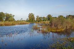 _IMG0469 (Henk de Regt) Tags: netherlands holland veluwe natuur nature landschap landscape moeras swamp mist fogbomen trees bos forest heide heath