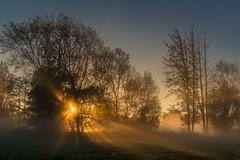 floating light (ralfkai41) Tags: wood sunrise sonne mist outdoor licht wald natur mystisch bäume sun forest lanschaft sonnenaufgang landscape mystic nebel nature trees fog