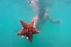 Aruba36 (ail33n_d3vlin) Tags: winner gopro aruba travel travelphotography traveling aileendevlin travelphotographer caribbean caribbeanocean caribbeansea beach water snorkeling goprophotography travelblog clearwaters palmbeach