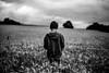 Par les soirs bleus d'été... (PaxaMik) Tags: parlessoirsbleusdété rimbaud blé champ culture champdeblé countryside country frenchcountry silhouette black blackandwhitephotos noiretblanc noir n§b wheat wheatfield