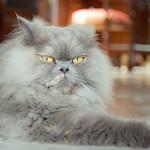 A very serious pose. 😾 thumbnail