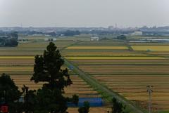 DSC_3902-36 (zunsanzunsan) Tags: 東平田 生石 生石神社 神社 秋 酒田市