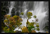 Flowery Falls (Ilan Shacham) Tags: landscape waterfall scenic view nature outdoors beauty veil water green vegetation iceland fineart fineartphotography gjain flower star yellow white highlands