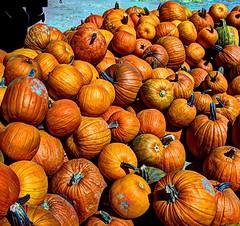 Diaz Farm pumpkins (JoelDeluxe) Tags: deming newmexico nm diazfarms joeldeluxe