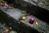 L'oubliée (Briren22) Tags: pomme marche feuilles automne