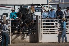GY8A4820.jpg (BP3811) Tags: 8seconds 2017 allen arizona bareback barrel bell belt bit boots boy breakaway bronc buck buckle bull bulldogger bustin busting calf chase clown corral cow cowboys cowgirl days fall gate hat hazer header healer helmet horns horse jump kids lariat leap mutton october queen racing reins rex riders riding rodeo rope roping run saddle sheep spurs steer team teamwork tie twist wilcox wrestling