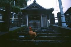 港集落の小さな神社 (rarirurero_fh) Tags: 神社 鶏 shrine