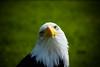 you are food (pamelaadam) Tags: 2014 animal digital scotland summer bird bald august cairnie huntly aberdeenshire fotolog thebiggestgroup
