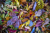 Leaves on a Frosty Morning (James Neeley) Tags: leaves autumn fall pattern abstract stilllife nature jamesneeley best2017