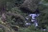 Flowing among the moss (aerojad) Tags: eos canon 80d dslr 2017 summer outdoors oregon pnw pacificnorthwest vacation travel wanderlust roadtrip historiccolumbiariverhighway columbiarivergorge columbiariverhighway wahkeenafalls forest waterfall landscape creek wahkeenacreek blurry blur depthoffocus moss longexposure daytimelongexposure slowshutter rock rocks