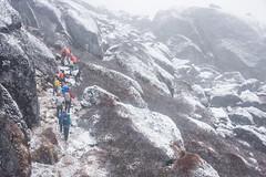 Gocha-la trek in Sikkim, India (David Ducoin) Tags: asia dzongri gochala group hike hiking himalaya india kangchenjunga landscape mountain nationalpark nature sikkim snow snowing trek treking trekking walking gangtok in