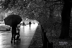 Walking In The Rain Umbrela and Stroller (rcss2800) Tags: downtown blackandwhite rain raining lonely park tree walkway sidewalk people road monochrome
