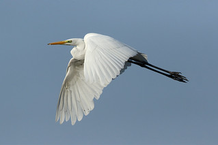 White in flight a