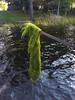 0004_09232017_084212_IMG_3567_sm (DavidB and JameyB) Tags: watersmeet michigan unitedstates us