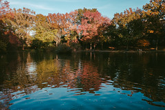 Autumn colors, Tilly Park (instagram.com/lanolan) Tags: autumn capitantillypark color day fall fujifilmx70 jamaicaqueens newyork newyorkcity newyorknewyork ny nyc outdoors outside people pond queens thebigapple tillypark trees water