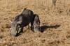 SENEGAL -  326 (Giulio Mazzini) Tags: adventure africa avventure black desert face free holiday landscape libertà portrait river senegal sun teranga world