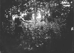 Bi in the forest (Attila Pasek (Albums!)) Tags: 8inchf29 8x10 bugac bugacikontaktfotográfiaitábor vds vdscameramanufactory ambrotype collodion forest girl glass largeformat pentac plate wet