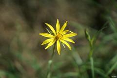 Couleurs d'automne (Missfujii) Tags: nature