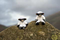 Dale and Ewe-Jean conquer Castlerigg (Explored) (hehaden) Tags: stone castleriggstonecircle keswick cumbria lakedistrict sheep toy swaledale