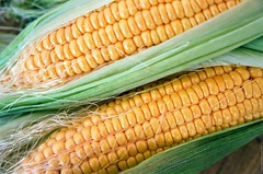 Maize - 2017 (Ігор Кириловський) Tags: maize corn c41 chernivtsi ukraine slr nikonf5 af zoomnikkor 28105mmf3545d film kodak ektar100 promaster spectrum 7uv macromode