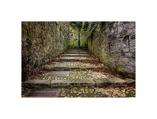 The well worn path