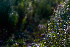 Titled Untitled (luckeycat) Tags: london ontario fall 2017 october forest city inner tree trees leaves photography lightroom luckeycat luckeyphoto canada bokeh flowers grass weeds