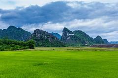 Národní park na dohled (zcesty) Tags: vietnam14 rýže pole krajina hory vietnam phongnha dosvěta quảngbình vn
