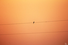 uk IMG_2115 (uday khatri photography) Tags: bird udaykhatriphotography udaykhatri dog flower flying birds beautiful art fine baaz abstract nature morning micro robin bulbul wildlife working water sky sunset shot creative canon care color city festival love