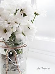White (Jean Turner Cain) Tags: flower flora floral flowers fleur flor bloem blomst white stilllife jeanturnercain
