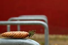 balance (FaabHe) Tags: berlin kreuzberg focus perspektive perspective red brown nature metal pinecone tannenzapfen green tree