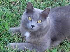 Ciao Pilù! (antonè) Tags: pilù cat chat micio sassari antonè gato kitten