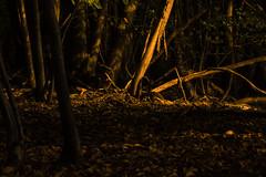 Forêt d'automne (Meculda) Tags: nikon d7200 sigma 105mm macro automne autumn france forêt extérieur tree