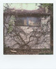 The shed (Skink74) Tags: colorsx70 film impossibleproject instant polaroid polaroidlandcamera sx70 sx70alpha1se shed impossible roidweek polaroidweek2017 garden autumn parthenocissus growth plant