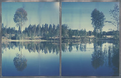 4 (Maija Karisma) Tags: polaroid instant pola littlebitbetterscan bulldog schneider schneiderkrauznachsymmar156300112500 8x10 largeformat polaroidback instantback nature impossible color8x10 diptych roidweek2017 autumnpolaroidweek expiredfilm