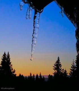 Catching a waterdrop from the melting icicle in the morning light.