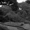 Koishikawa Kōrakuen Garden (ss9679) Tags: japan tokyo koishikawa kōrakuen garden hasselblad 500cm mediumformat 120 6x6 asia blackandwhite monochrome ilford ilfordhp5400 hp5 800 pushedfilm epson4180 telephoto zeiss carlzeiss cf 150mm film f4 analog kodakhc110 park trees stream mittelformat sonnar handheld filmdev:recipe=11606 film:brand=ilford film:name=ilfordhp5400 film:iso=800 developer:brand=kodak developer:name=kodakhc110